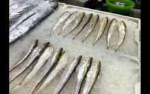 长江全面禁捕!市场上的刀鱼从何而来?